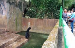 Daily Mail Beritakan Beruang Kelaparan Kebun Binatang Bandung Bantah Biarkan