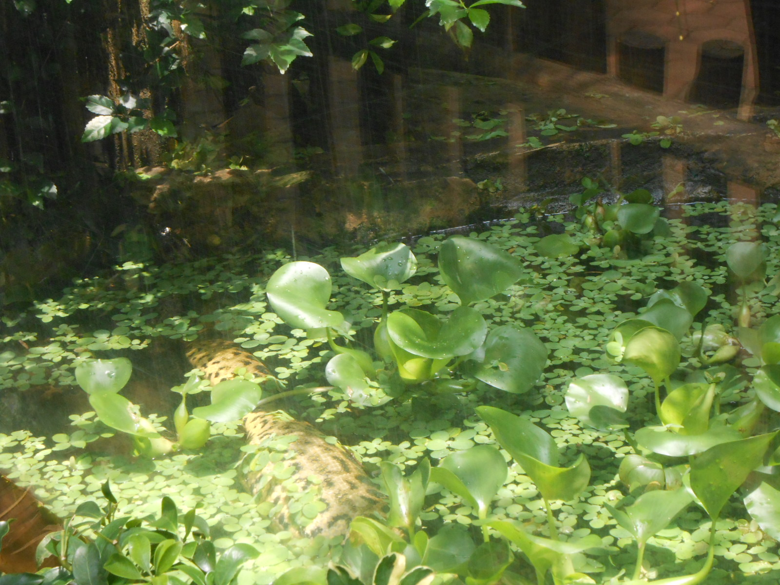 Der Zytgloggeturm 2013 Jenis Ular Koleksi Hewan Kebun Binatang Bandung