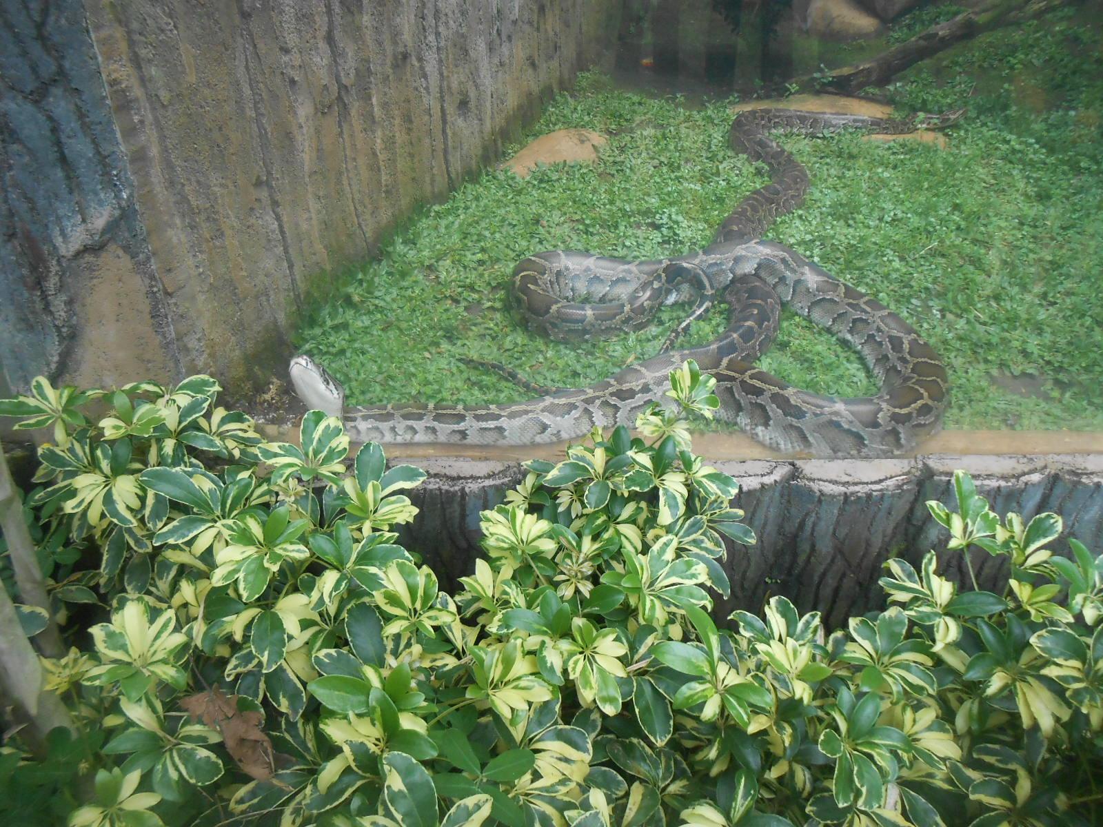 Der Zytgloggeturm 2013 Kebun Binatang Bandung Kab