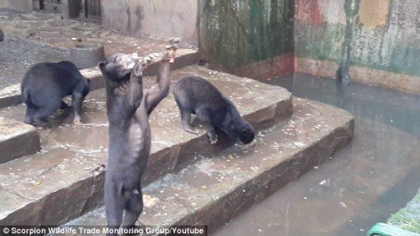 Kebon Binatang Bandung Balebandung Beruang Madu Kebun Kab