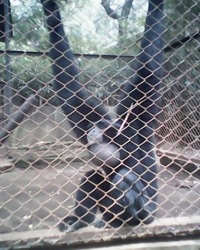 Kebun Binatang Bandung Tentang Kab