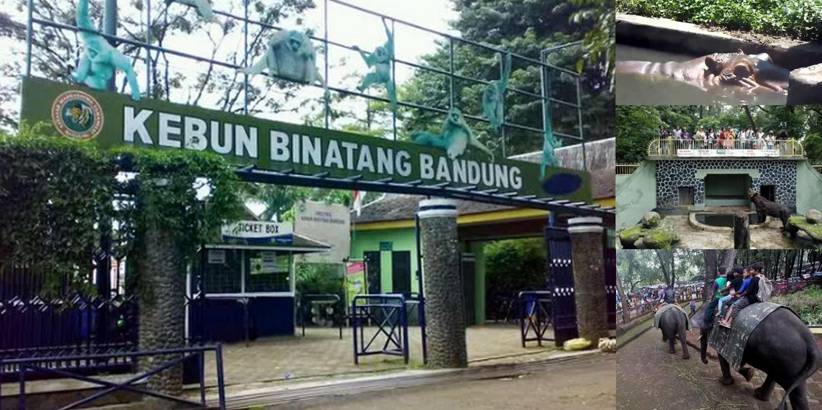 Kebun Binatang Bandung Wisata Pendidikan Hiburan Musim Liburan Kab
