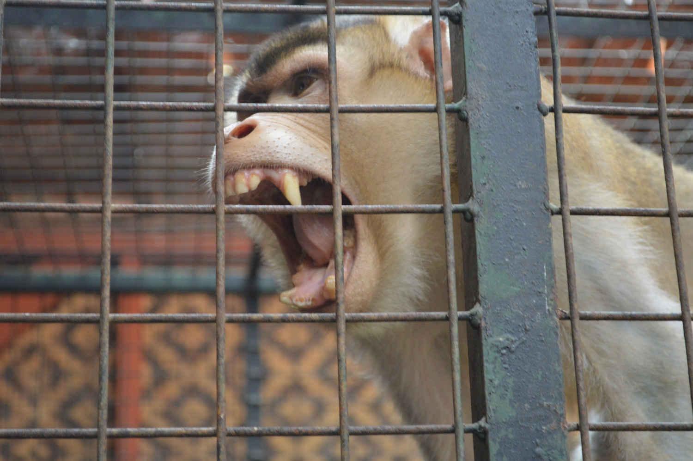 Kebun Binatang Garut Cikembulan Terdapat Sekitar 16 Km Pusat Kota