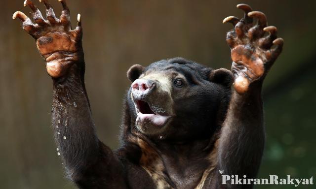 Menteri Lingkungan Hidup Angkat Bicara Soal Kebun Binatang Bandung Beruang