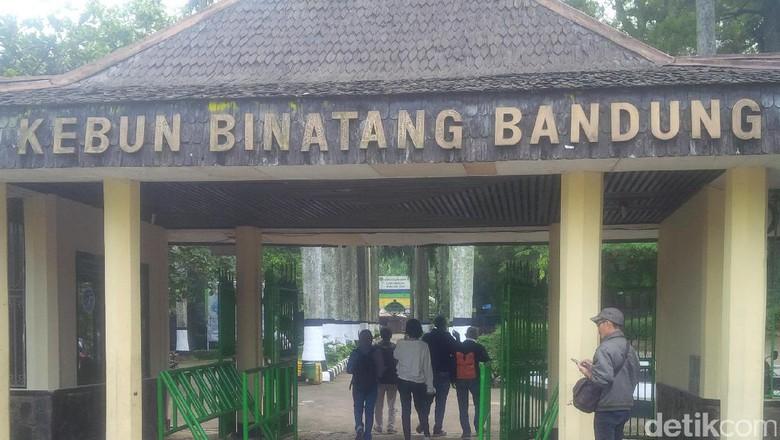 Pertama Lebaran Kebun Binatang Bandung Ramai Pengunjung Hari Kab