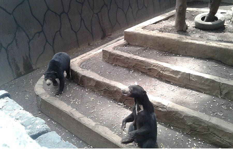 Satwa Kebun Binatang Bandung Butuh Tua Asuh Website Resmi Http