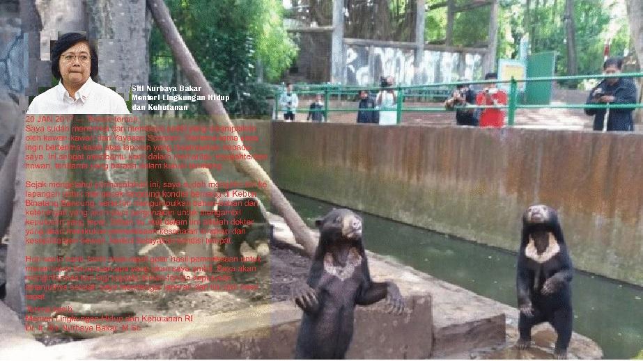 Terkait Beruang Madu Menteri Klh Putuskan Nasib Kebun Binatang Bandung