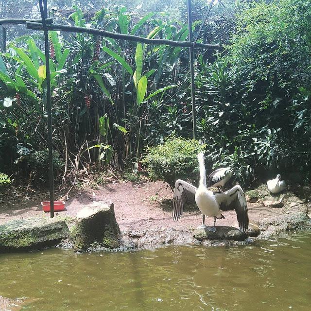Top 14 Tempat Wisata Menarik Bandung Kebun Binatang Kab