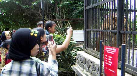 Wisata Fauna Kebun Binatang Bandung Pariwisata Indonesia Lokasinya Dekat Institut