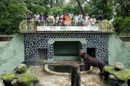 Wisata Kebun Binatang Bandung Tempat Terbaik Indonesia Kandang Beruang Kab