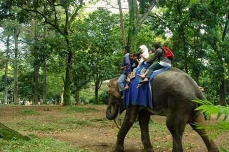 Wisata Kebun Binatang Bandung Tempat Terbaik Indonesia Naik Gajah Kab