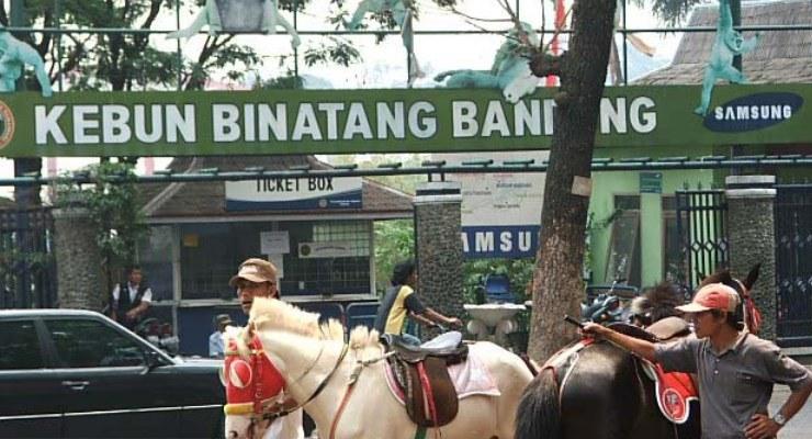 Wisata Mengasyikan Kebun Binatang Bandung Kab