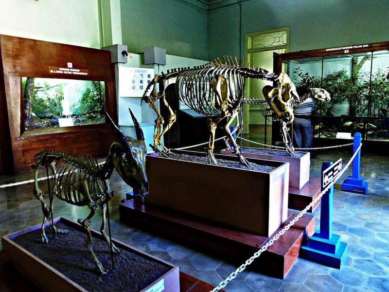 36 Tempat Wisata Bandung Wajib Dikunjungi Museum Zoologi Barli Kab