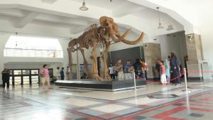Fosil Gajah Blora Objek Favorit Berselfie Museum Geologi Jalan Diponegoro