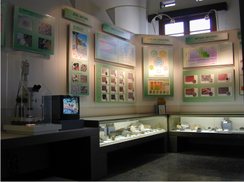 Museum Geologi Bandung Alumni Pertambangan Smkn 4 Bojonegoro Berbagai Macam