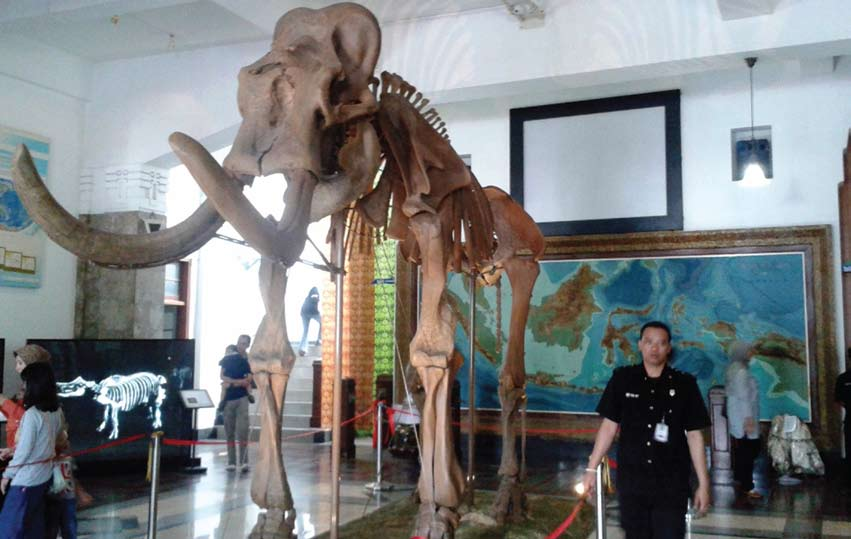 Museum Geologi Bandung Pajang Fosil Gajah Blora Jadi Daya Tarik