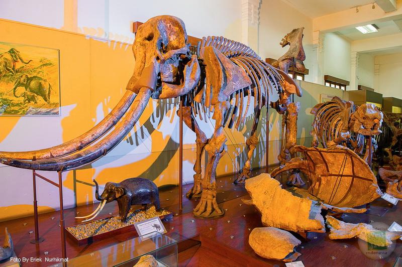 Museum Geologi Dinas Pariwisata Kebudayaan Provinsi Jawa Barat Galeri Foto