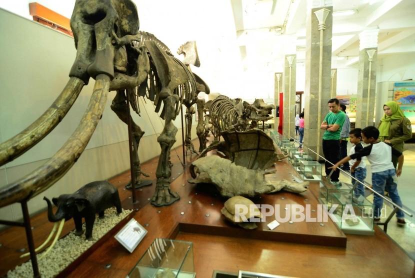 Ntt Minta Geologi Bandung Kembalikan Fosil Gajah Republika Online Wisata