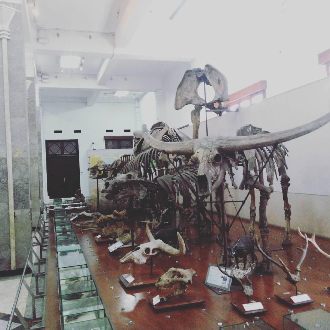 Sejarah Museum Geologi Bandung Img 1492078224 Jpg Kab