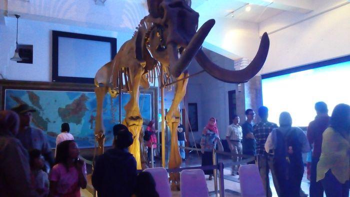 Tag Museum Geologi Tambah Koleksi Tribun Jabar Bandung Kab