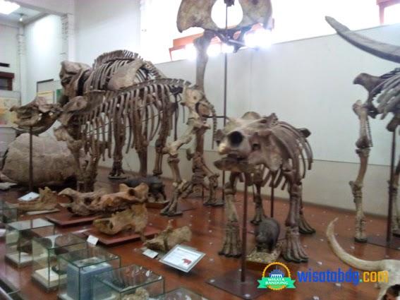 Wisata Edukasi Museum Geologi Bandung Kontak Kab