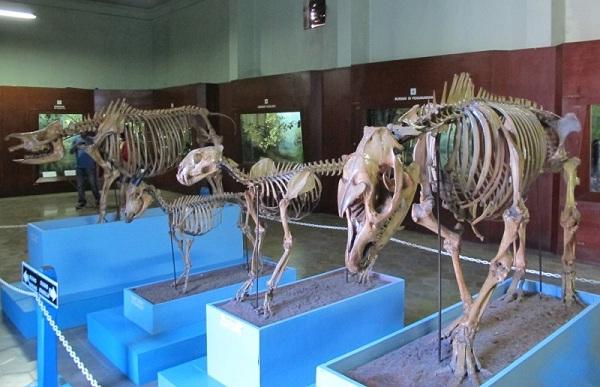 46 Tempat Wisata Bandung Murah Meriah Tak Membosankan Museum Zoologi