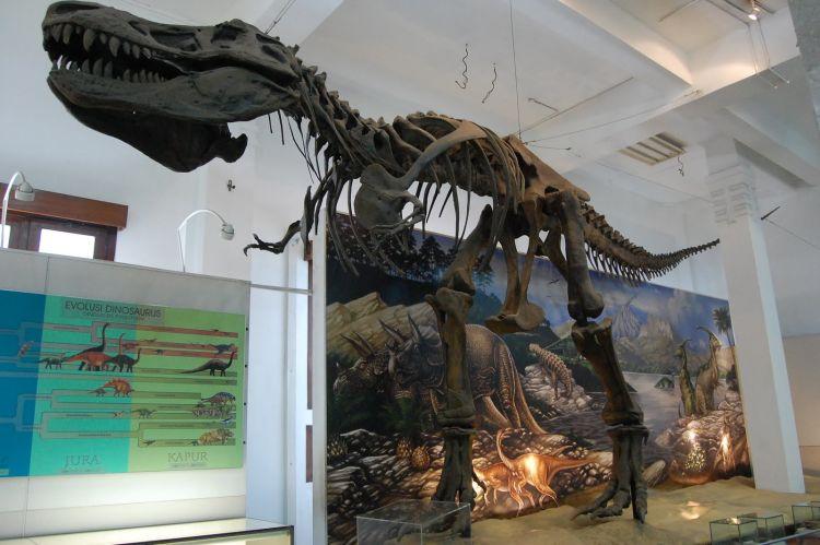 11 Taman Dinosaurus Indonesia Buku Tahu Museum Geologi Bandung Musium
