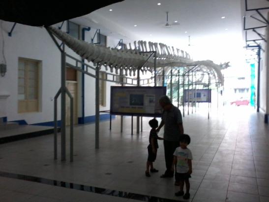11 Taman Dinosaurus Indonesia Buku Tahu Museum Zoologi Bogor Musium