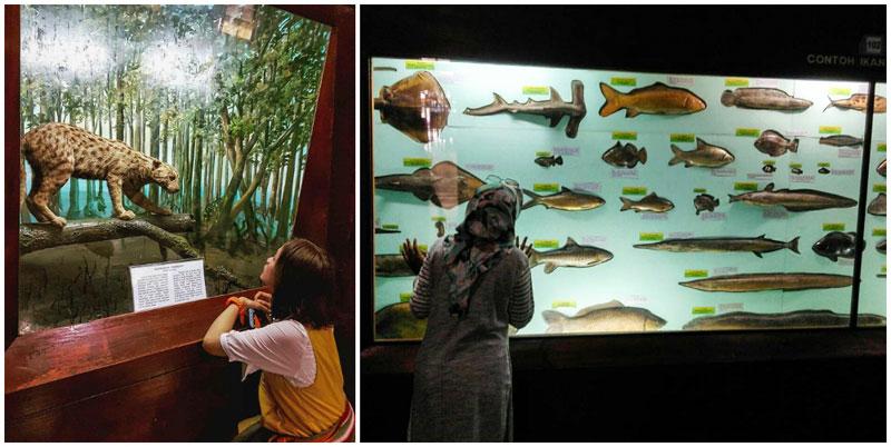 20 Tempat Wisata Anak Bogor Penuh Petualangan Keceriaan Photo Ochameows