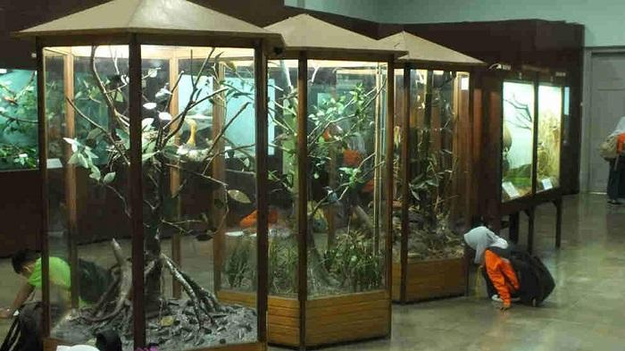 25 Tempat Wisata Bogor Wajib Dikunjungi Museum Zoologi Musium Kab
