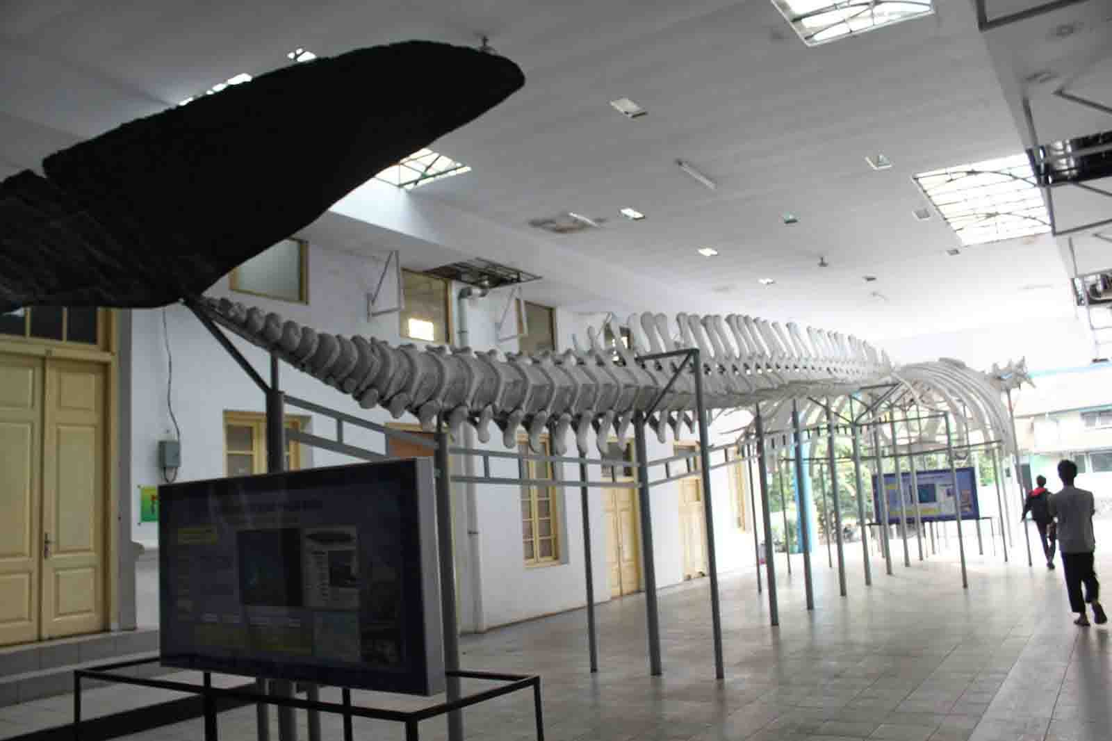 26 Jajaran Tempat Wisata Alam Bogor Wajib Dikunjungi Museum Zoologi