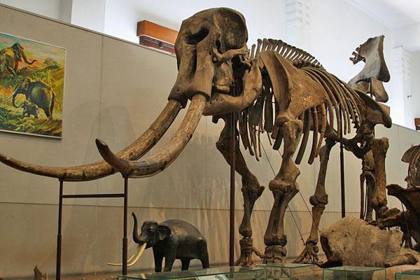5 Pilihan Tempat Wisata Museum Bandung Pendidikan Musium Zoologi Kab