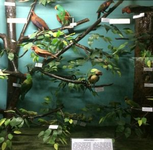 Daftar Wisata Edukasi Anak Bogor Tua Wajib Baca Info Museum