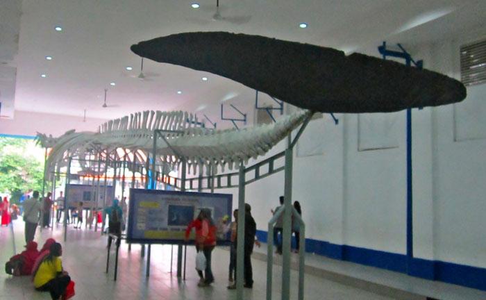 Destinasi Wisata Kebun Raya Bogor Tempat Museum Zoologi Musium Kab
