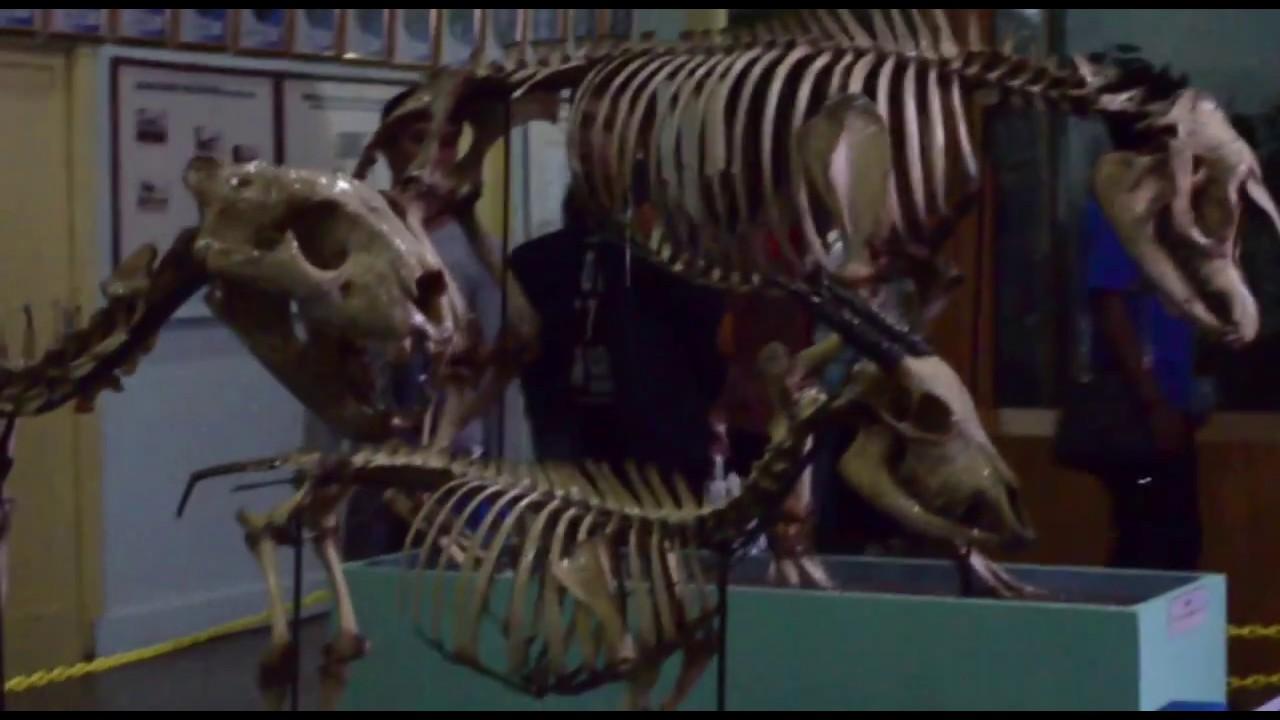 Film Dokumenter Museum Zoologi Bogor Youtube Musium Kab Bandung