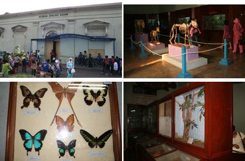 Juli 2007 Harjo Museum Didirikan 1894 Nama Asli Zoologicum Bogoriensis