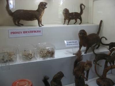 Kerajinan Mendong Portal Pemerintah Kabupaten Malang Museum Zoologi Frather Vianney