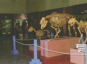 Museum Zoologi Berteman Satwa Nusantara Potlot Adventure Kerangka Ikan Paus