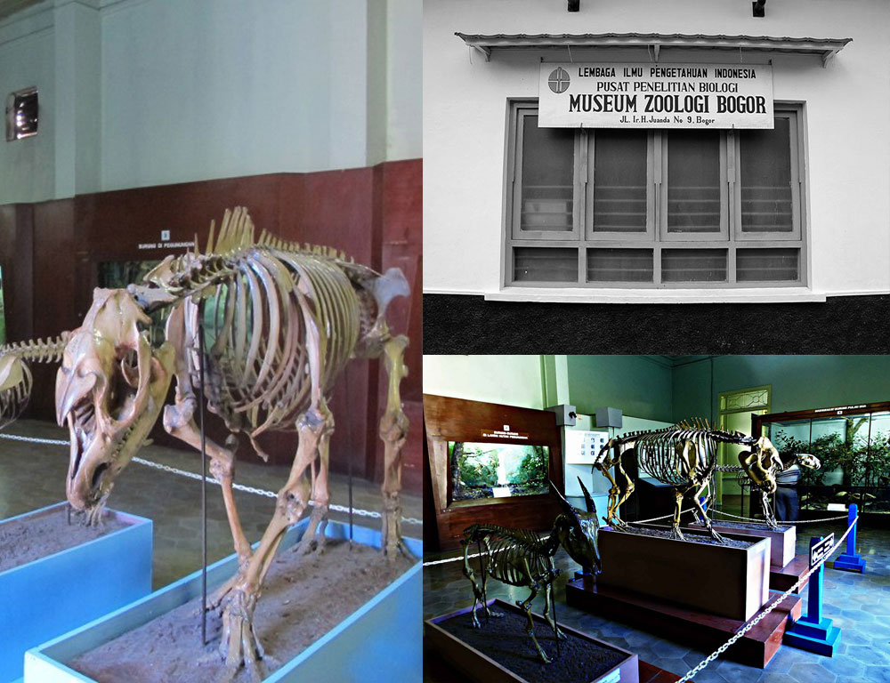 Museum Zoologi Bogor Koleksi Wisata Musium Kab Bandung