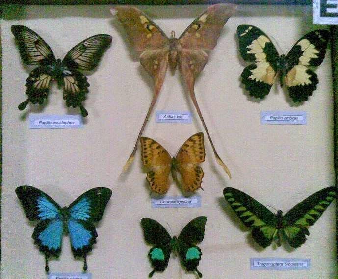 Museum Zoologi Bogor Tempat Study Tour Favorit Wisata Indonesia Musium