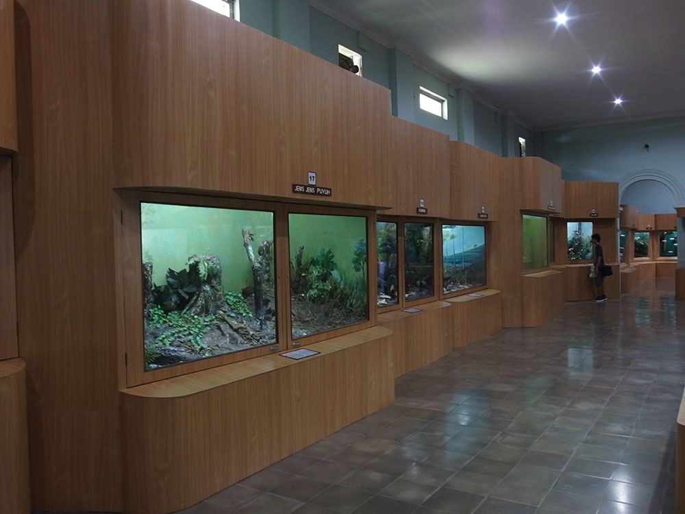 Museum Zoologi Bogor Tiket Masuk Gratis Travels Musium Kab Bandung