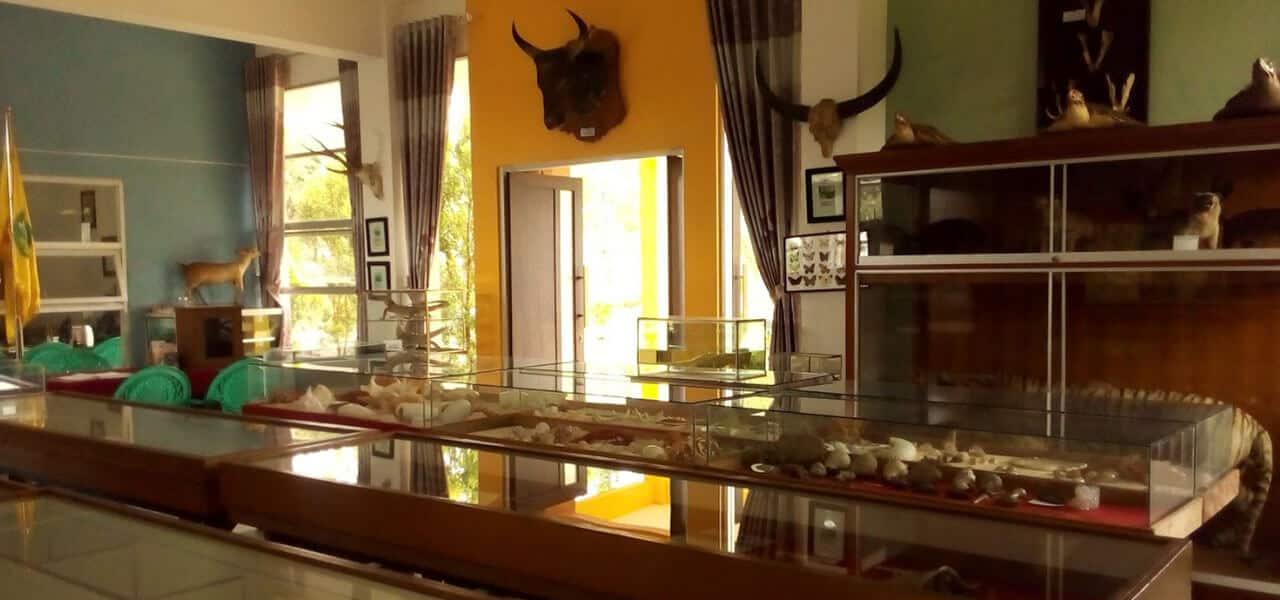 Museum Zoologi Frater Berwisata Sambil Mempelajari Biota Laut Koleksi Spesimen