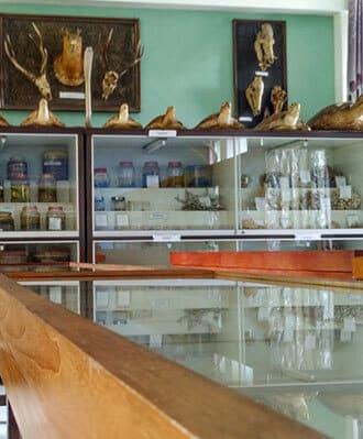 Museum Zoologi Frater Vianny Macigo Malang Vianney Musium Kab Bandung