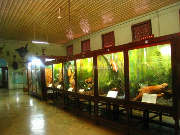 Museum Zoologi Kids Holiday Spots Liburan Anak Informasi Menarik Jenis