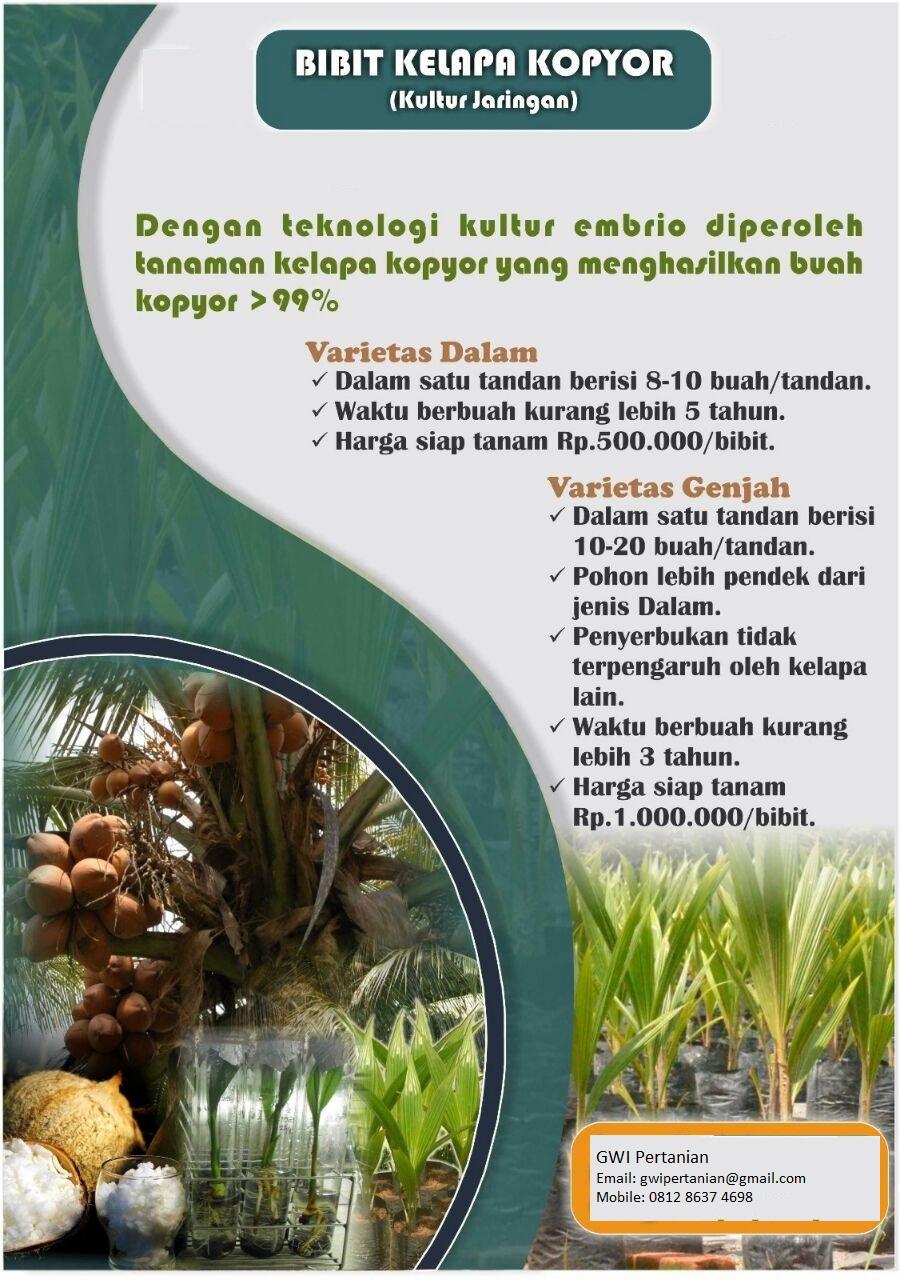 Museum Zoologi Pematang Siantar Sumatera Utara Jual Bibit Kelapa Kopyor