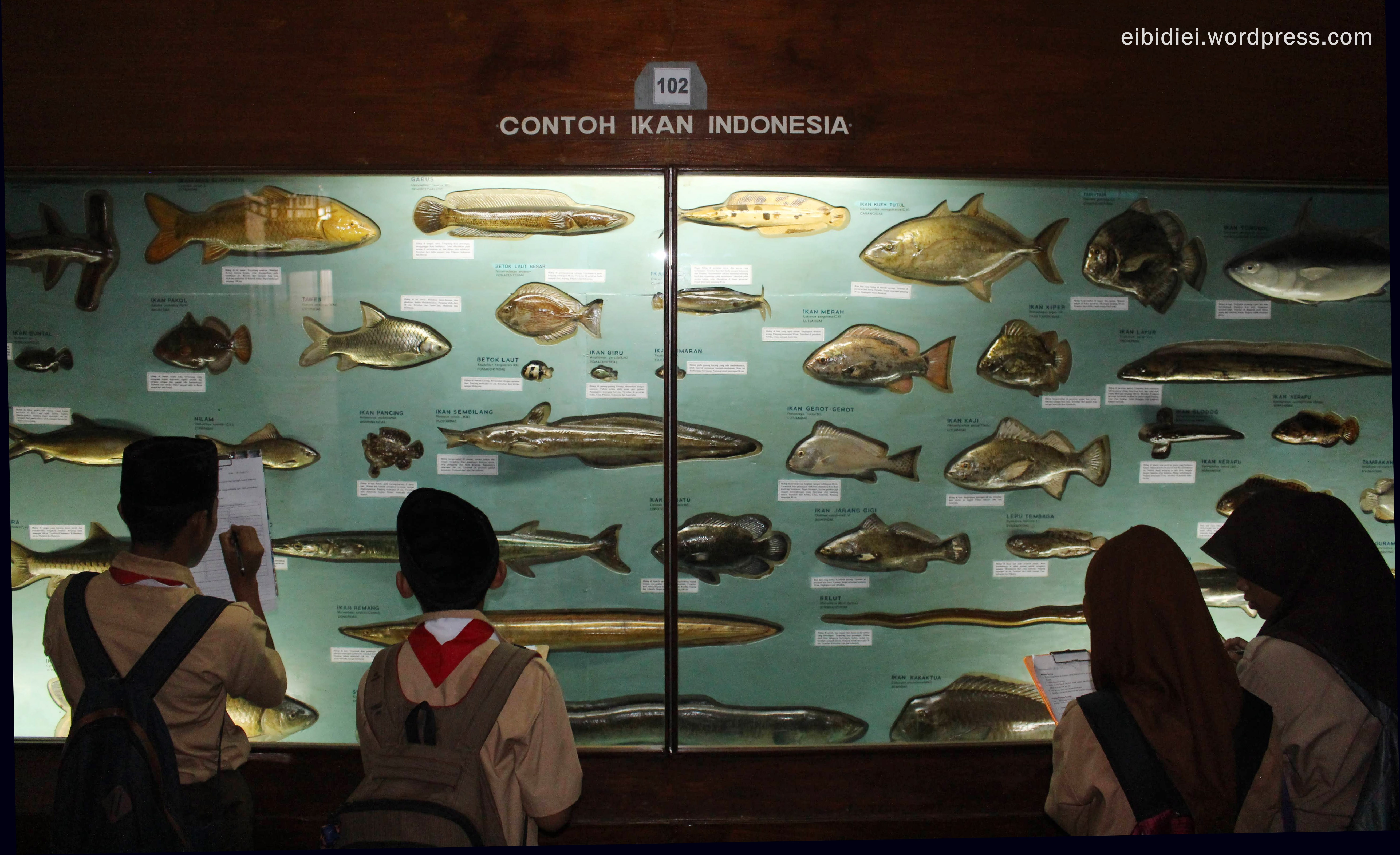 November 2015 Zaronja Berkelana Mts Al Ikhwaniyah Museum Zoologi Musium