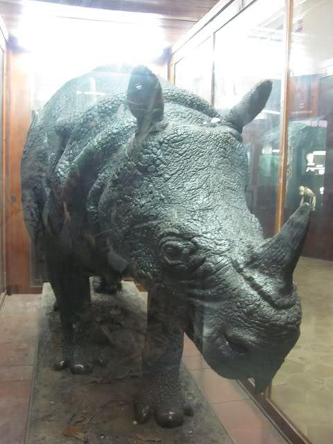 Paus Raksasa Museum Zoologi Bogor Badak Sumber 2dheart Wordpress Musium