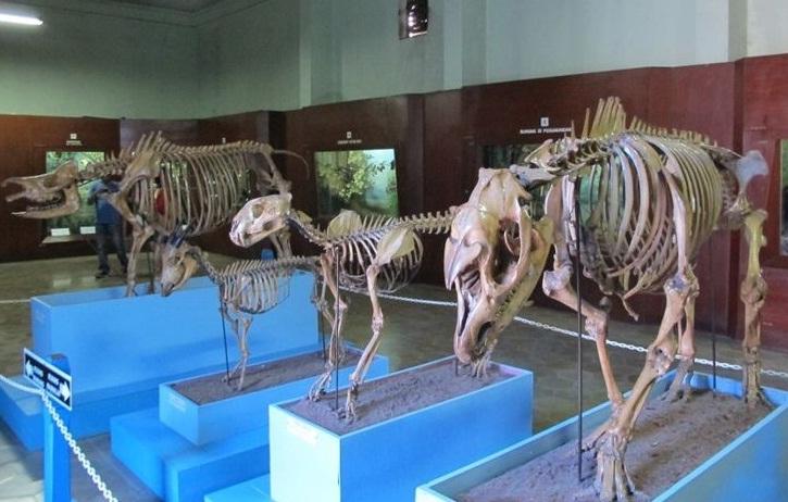 Sepi Pengunjung Museum Zoologi Bogor Minim Koleksi Merahputih Musium Kab