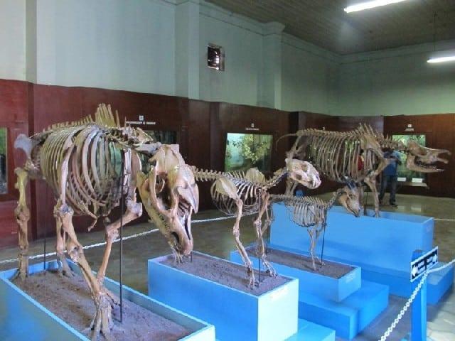 Tempat Wisata Anak Bogor Museum Zoologi Kebun Raya Jpg Musium