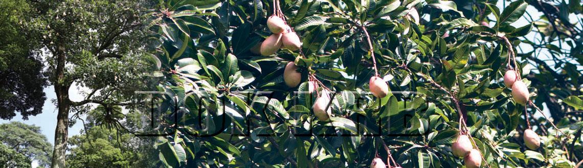 Website Pkt Kebun Raya Bogor Lipi Lembaga Kemang Identitas Flora